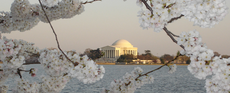 Thomas Jefferson Memorial with Cherry Tree Blossoms