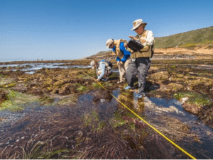 Researchers at Tide Pools